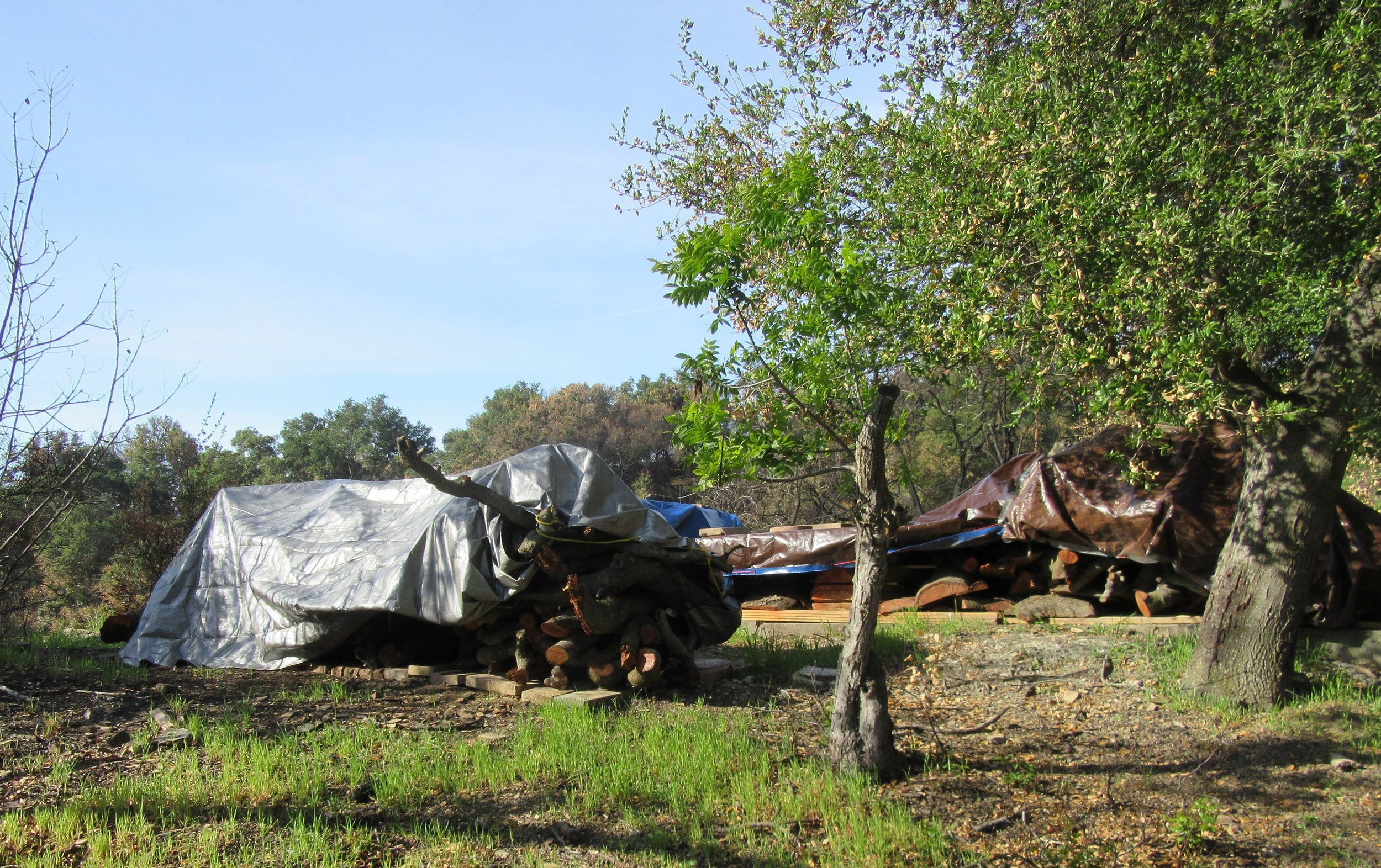 WOOD FROM BABA'S TREE - including milled planks, walking-stick-sized limbs, end pieces and assorted other chunks - are collected and stored. They are covered with tarps and sitting on an old foundation from a shed that was on the property before the 1985 New Life Fire. (Photo: Sam Ervin, April 3, 2018)