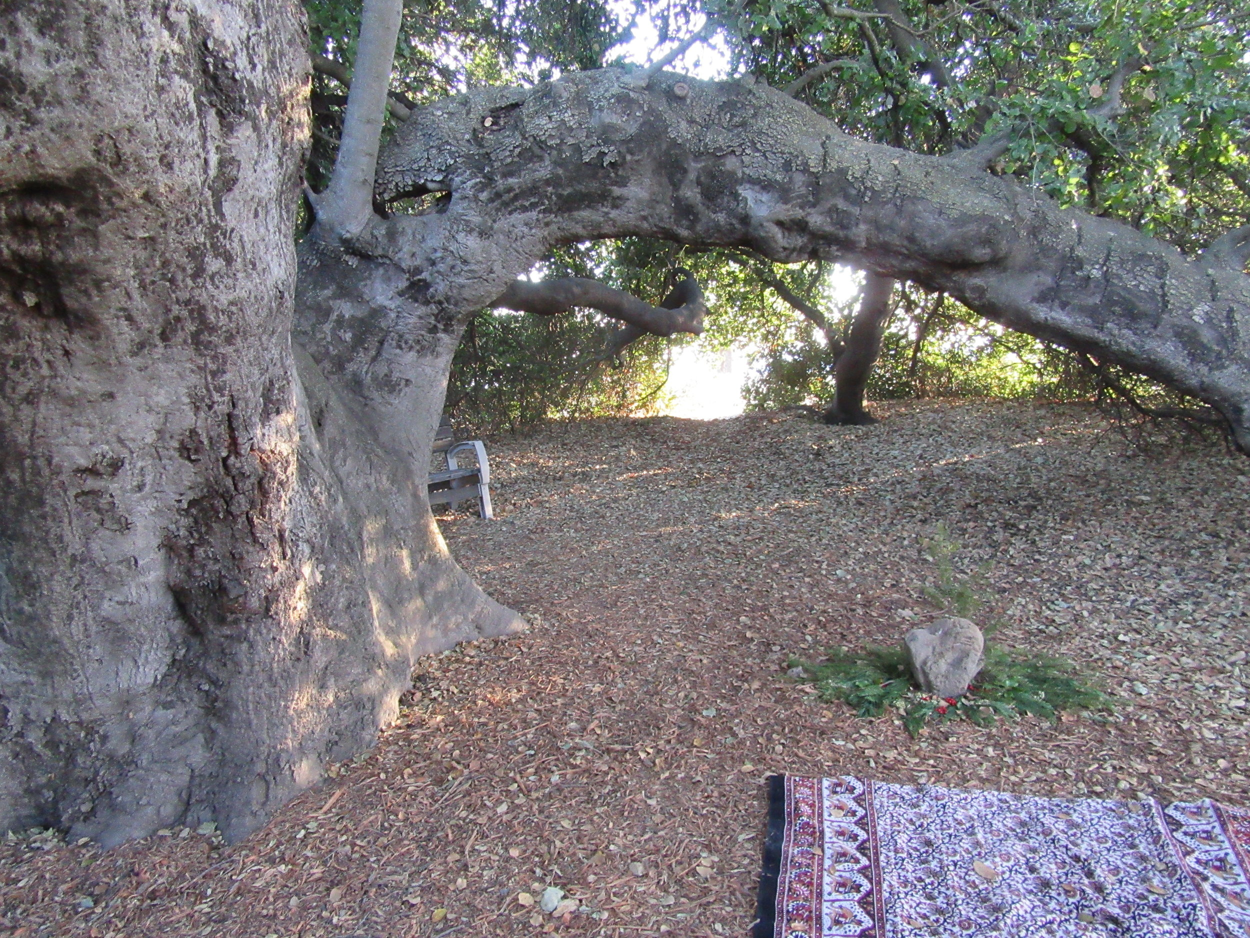 A BITTERSWEET MEMORY of being under Baba's Tree about a month before the December 2017 Thomas Fire at Meher Mount. The heart rock marks the spot where Avatar Meher Baba sat alone in 1956. (Photo: Sam Ervin, November 2017)