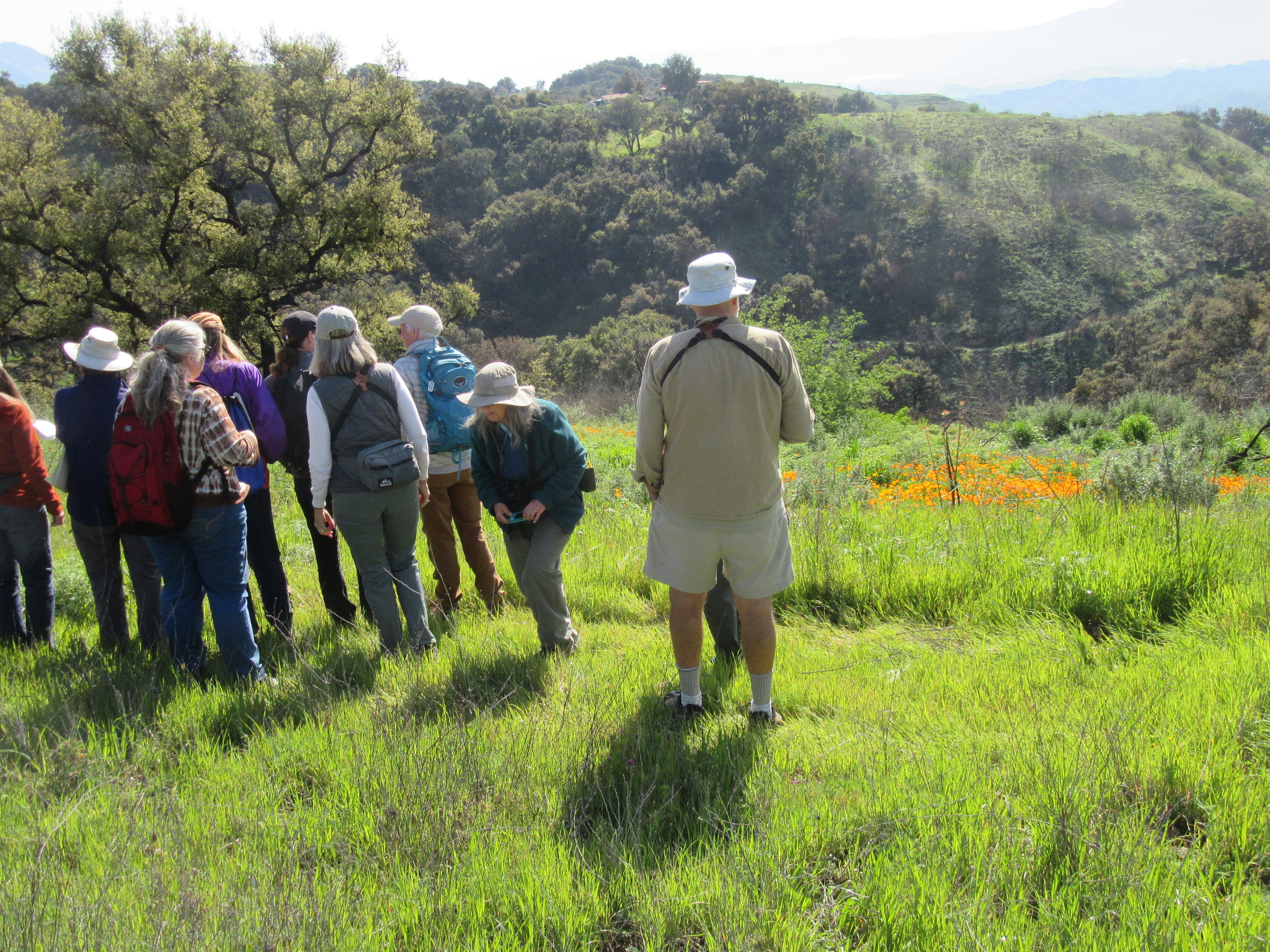 MEMBERS and guests of the Channel Islands chapter of the California Native Plant Society on Sunday, March 24, 2019, view the native plants and flowers at Meher Mount. (Photo: Sam Ervin)
