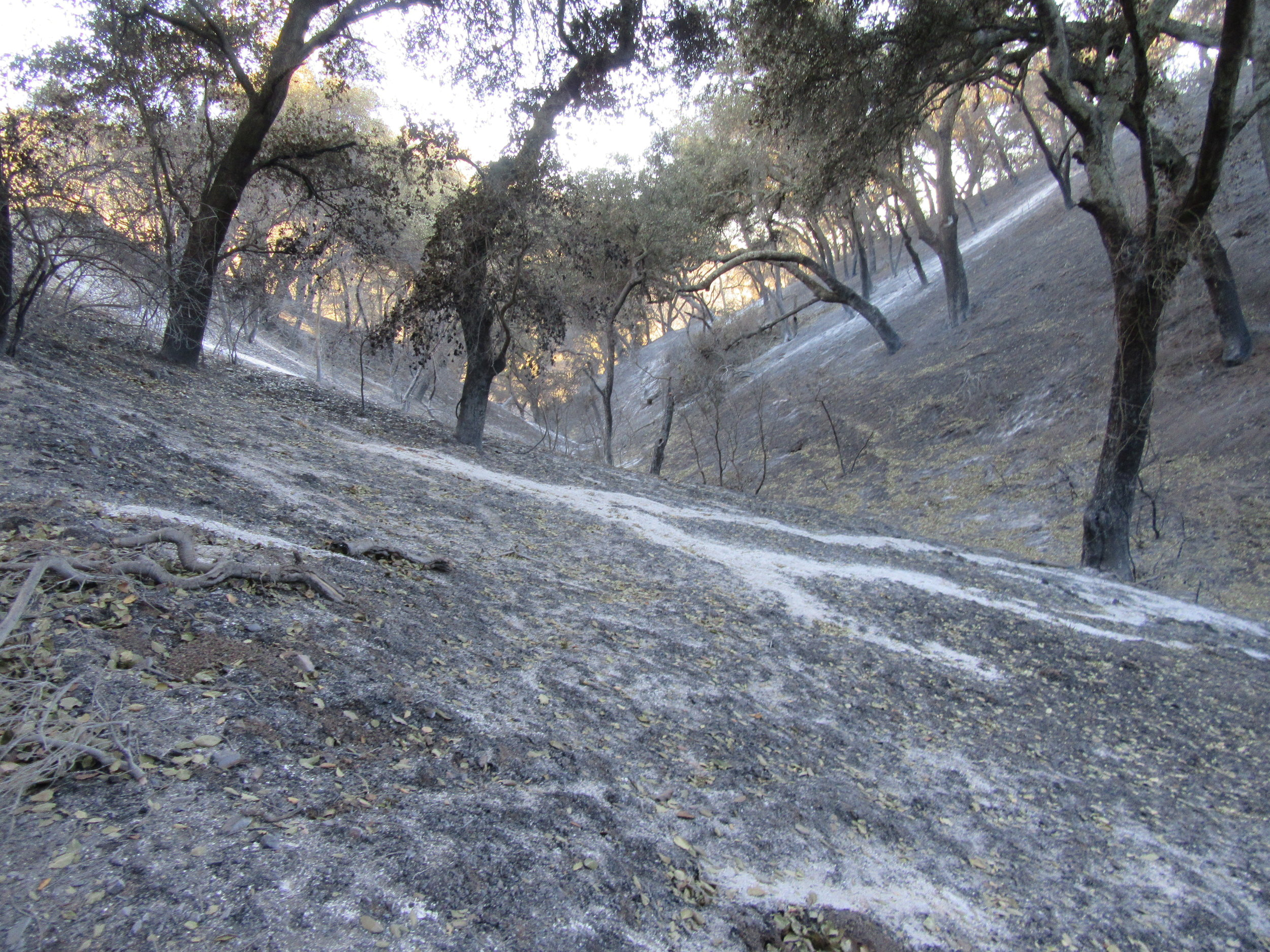 A BURNED AREA on the way to the well head at Meher Mount just after the December 4, 2017 Thomas Fire. (Photo: Sam Ervin, December 21, 2017)