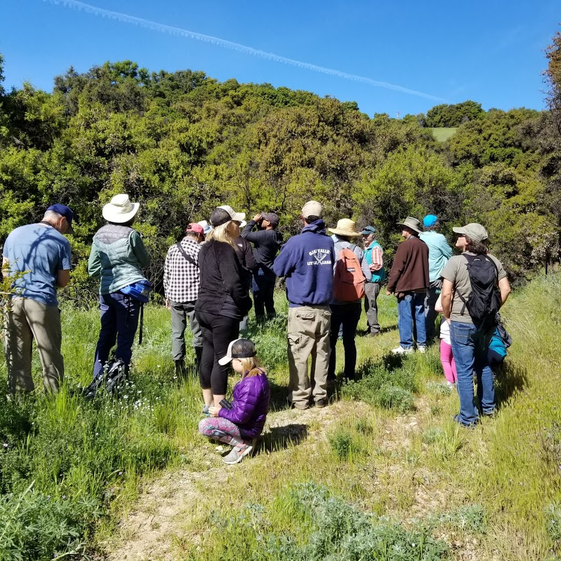 BIRD WATCHERS along the well road at Meher Mount guided by two volunteers from the Ventura Audubon Society, Rick Burgess and Karen Laing for Family Bird Watching Day, April 6, 2019. (Photo: Margaret Magnus)