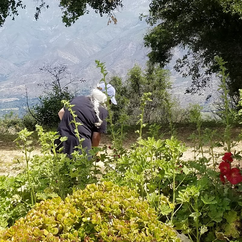 GINGER GLASKY is weeding the garden and open area by the Visitor Center/Caretaker Quarters. (Photo: Margaret Magnus, May 18, 2019)