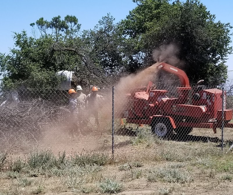 LNS TREE SERVICE chipping the remaining twigs and branches from the burned limbs of Baba's Tree at Meher Mount to be used as mulch. (Photo: Margaret Magnus, June 24, 2019)
