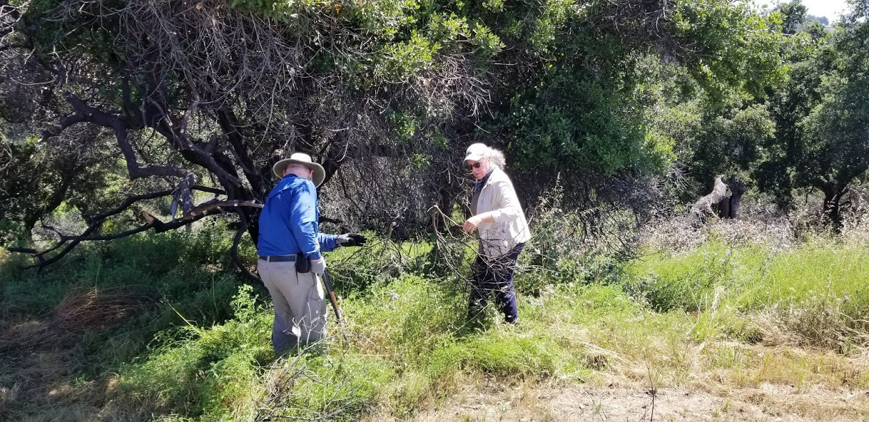 SAM ERVIN & AGNES MONTANO are clearing the dead branches near Baba's Tree at Meher Mount for extra fire protection. (Photo: Margaret Magnus, June 5, 2019)