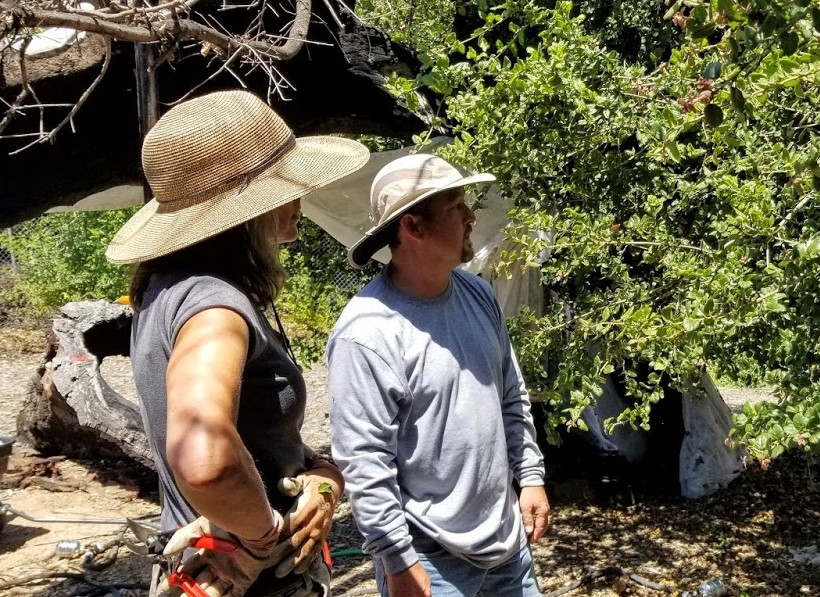 ELLEN KWIATKOWSKI is getting an orientation to caring for Baba's Tree from ISA Certified Arborist Michael Inaba. (Photo: Margaret Magnus, June 22, 2019)