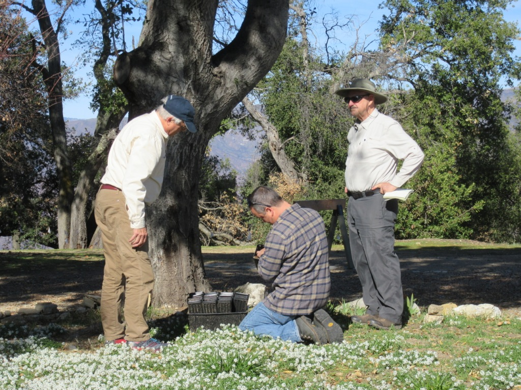 CHECKING ON THE PLANTED ACORNS are Robert Turnage, arborist Michael Inaba, and Sam Ervin. The acorns are in pots under an oak tree near the Visitor Center at Meher Mount. (Photo: Margaret Magnus, December 19, 2018)