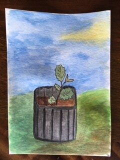 """SWEET BABY OAK"" by Kristina Somma, who was staying at Meher Mount in January 2019 with her husband Robert Turnage as temporary caretakers. She was doing an-art-project-a-day for the month of January and was inspired by the acorns from Baba's Tree. She and Robert had harvested the acorns, germinated them and then planted them in pots to get their start in life."
