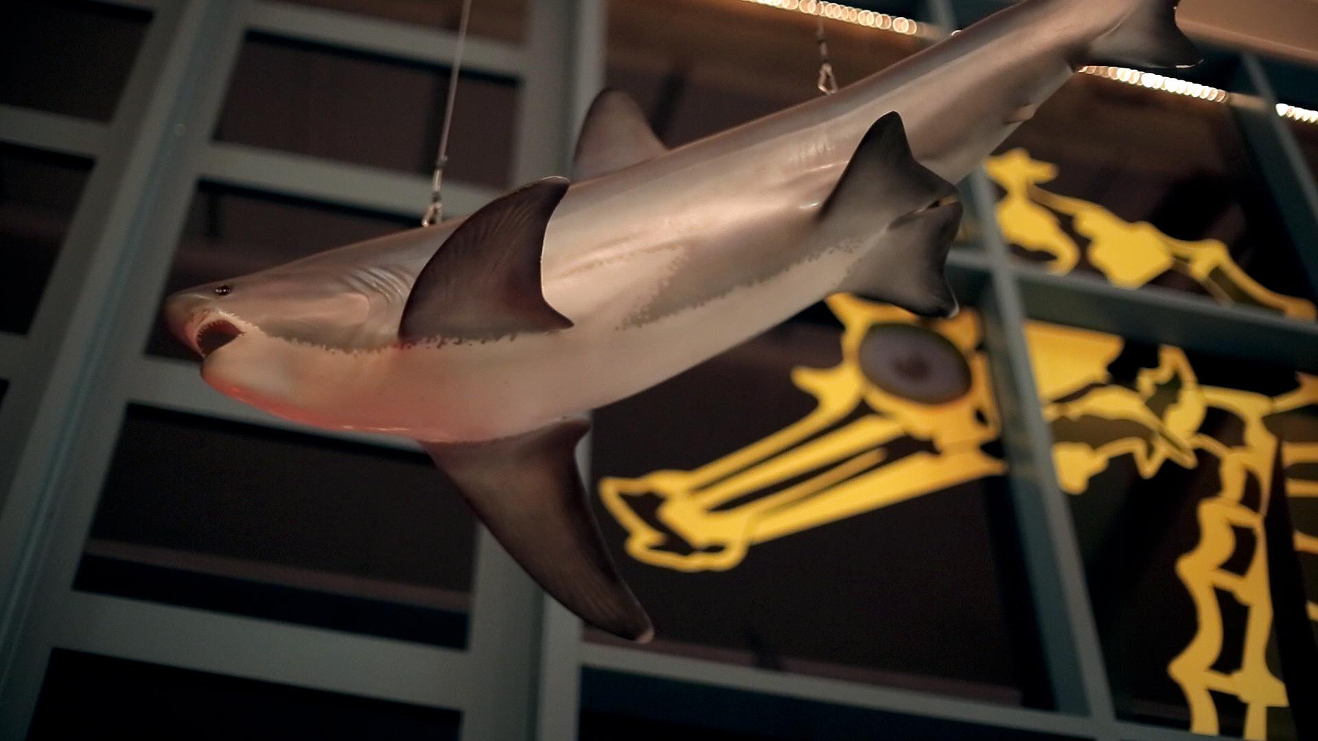 ValKellen-shark.jpg