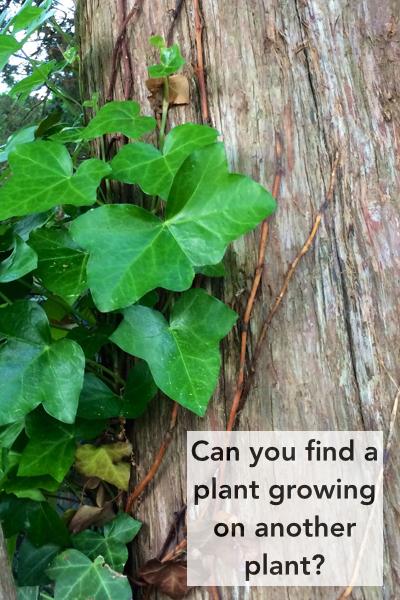 NatureNerdingCards.009.jpg