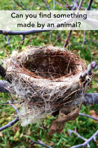 NatureNerdingCards.010.jpg