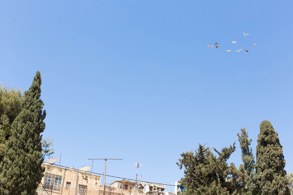 Bethseda; I was so enthralled by these carrier pigeons. You could hear their bells ring as they flew circles overhead.
