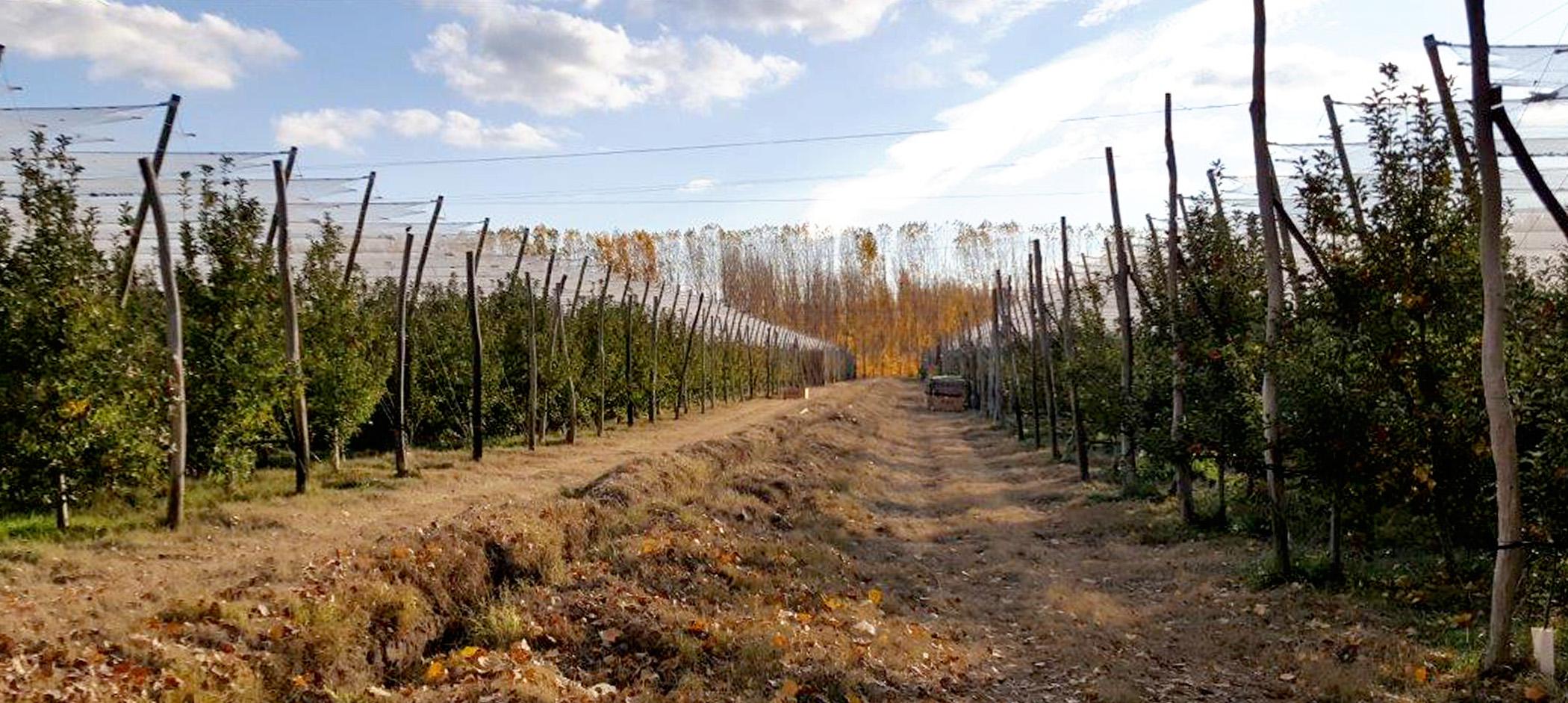 PatagoniaGallery4.jpg