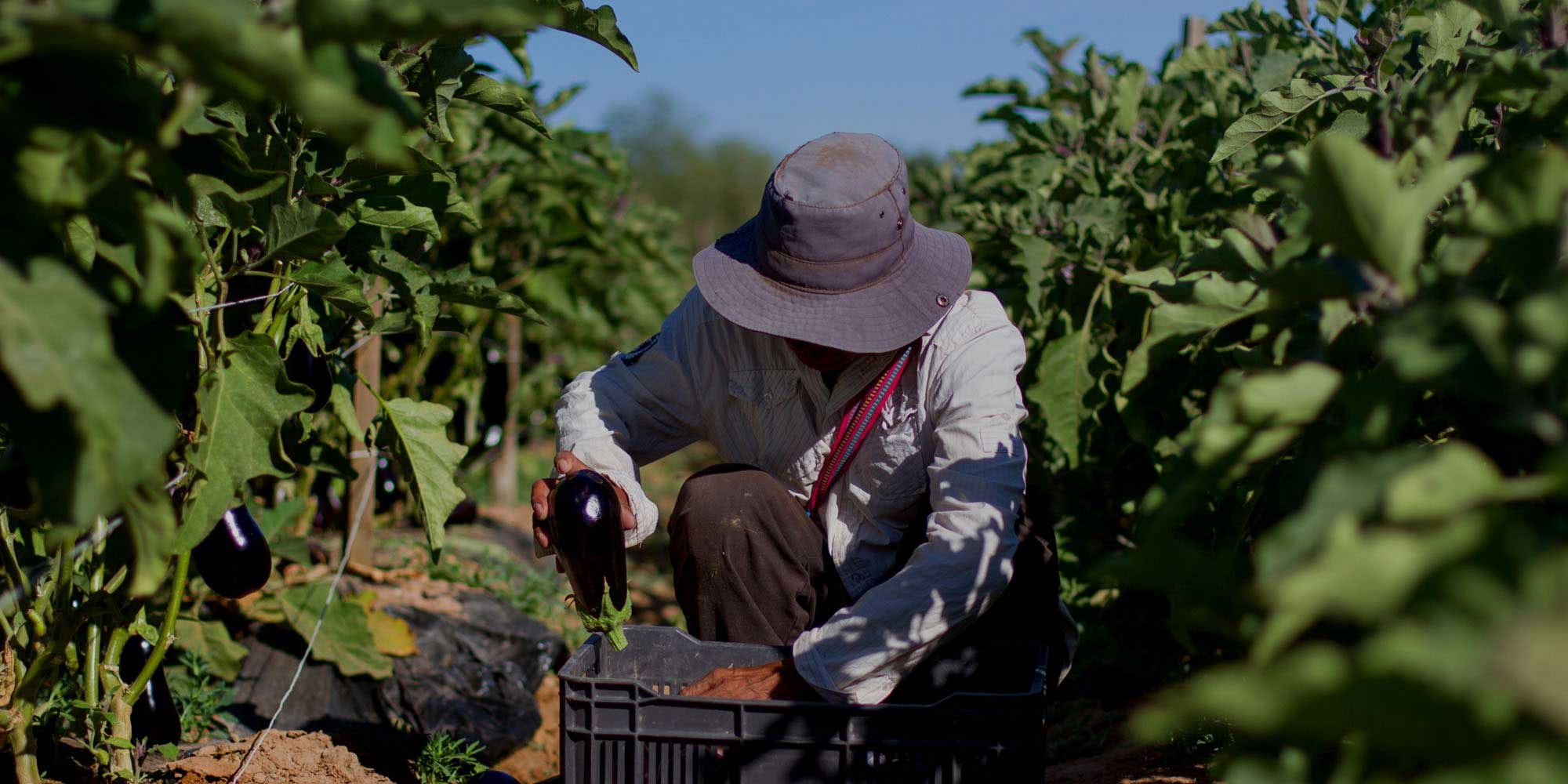 "Fair Trade — empowering workers and communities.<span class=""credit""><a href=""http://www.fairtradeusa.org"" target=""blank"">© James Rodriguez for Fair Trade USA</a></span>"