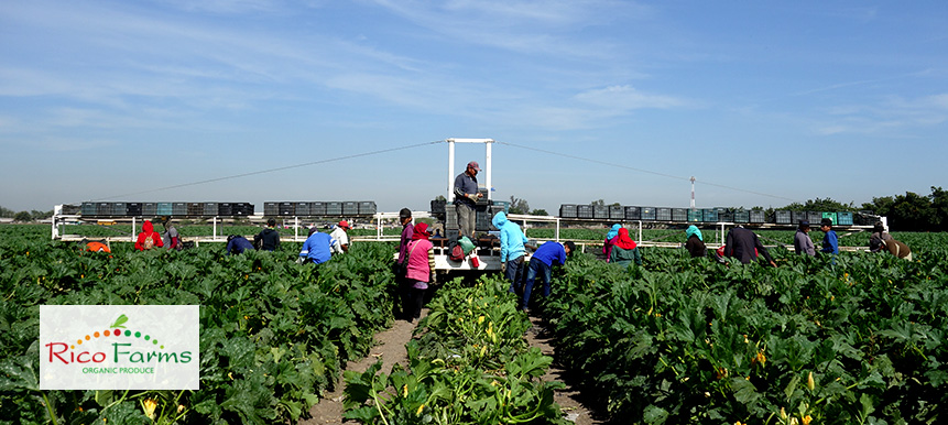 Rico Farms-Sinaloa-Fields.jpg