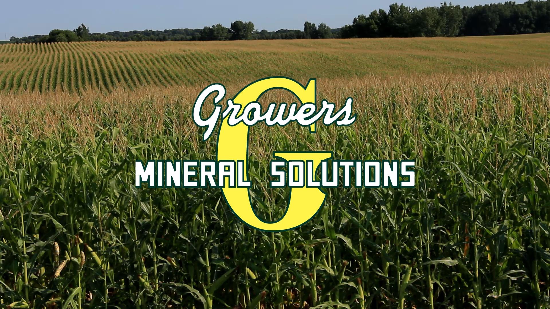 Growers on corn.jpg