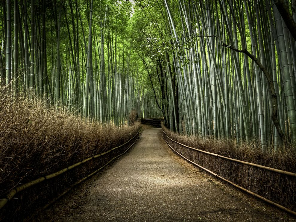 Bamboo Forest in Arashiyama, Japan. National Geographic Photo by Photograph by Kyle Merriman, Your Shot.