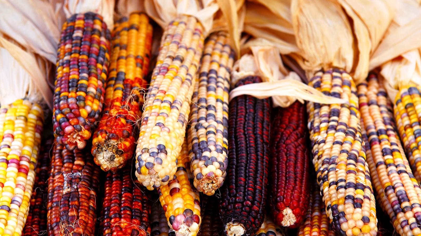 first-thanksgiving-corn.ngsversion.1396531303776.jpg
