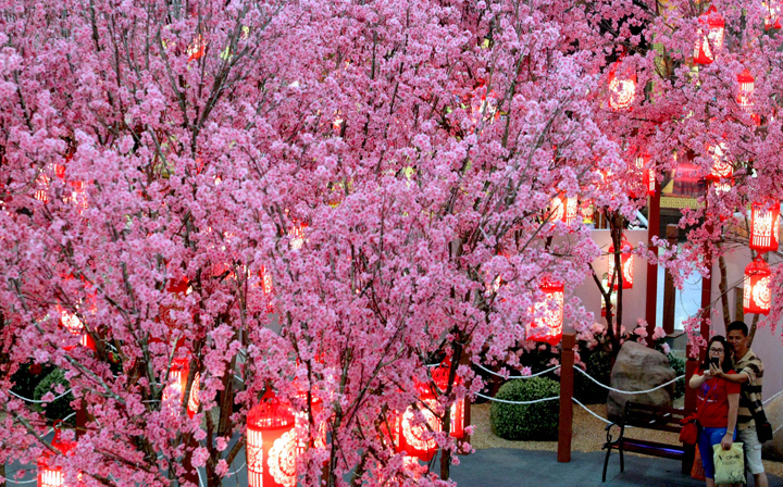 A couple takes pictures in front of Chinese plum blossoms trees decoration in Kuala Lumpur, Malaysia, Tuesday, Jan. 28, 2014. (Photo credit: Daniel Chan/AP Photo)