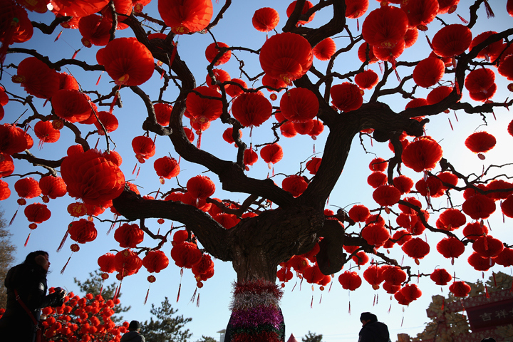 A visitor passes the trees decorated with red lanterns at the Spring Festival Temple Fair for celebrating Chinese Lunar New Year of Horse at the Temple of Earth park on Jan. 30, 2014 in Beijing, China. (Photo credit: Feng Li/Getty Images)