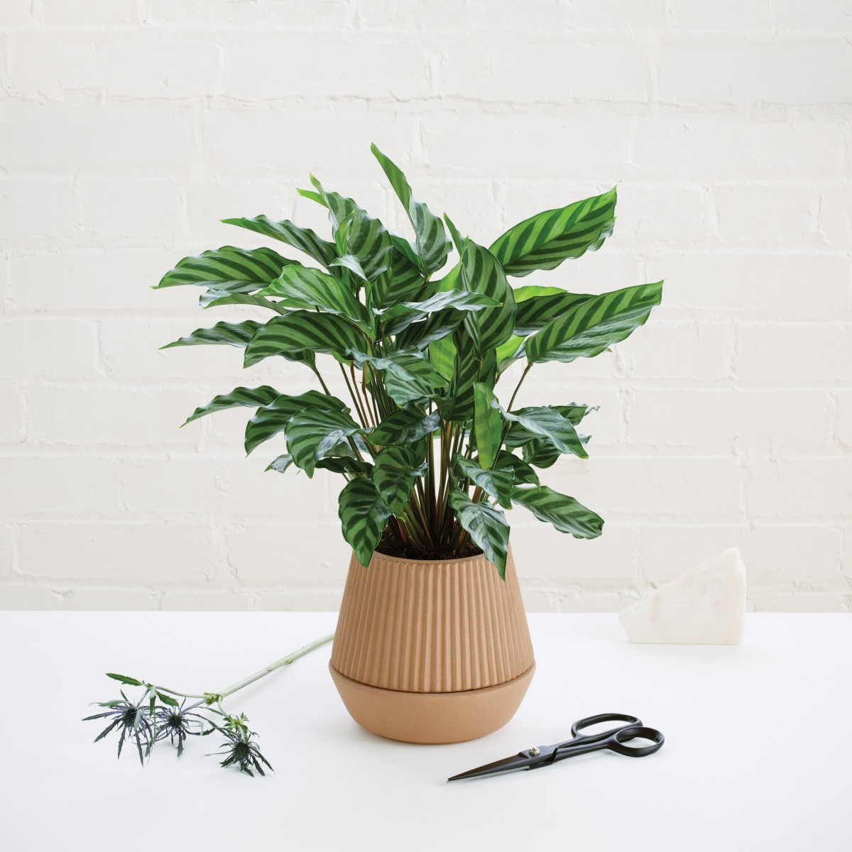 880104-745-pleated-planter-001_3.jpg