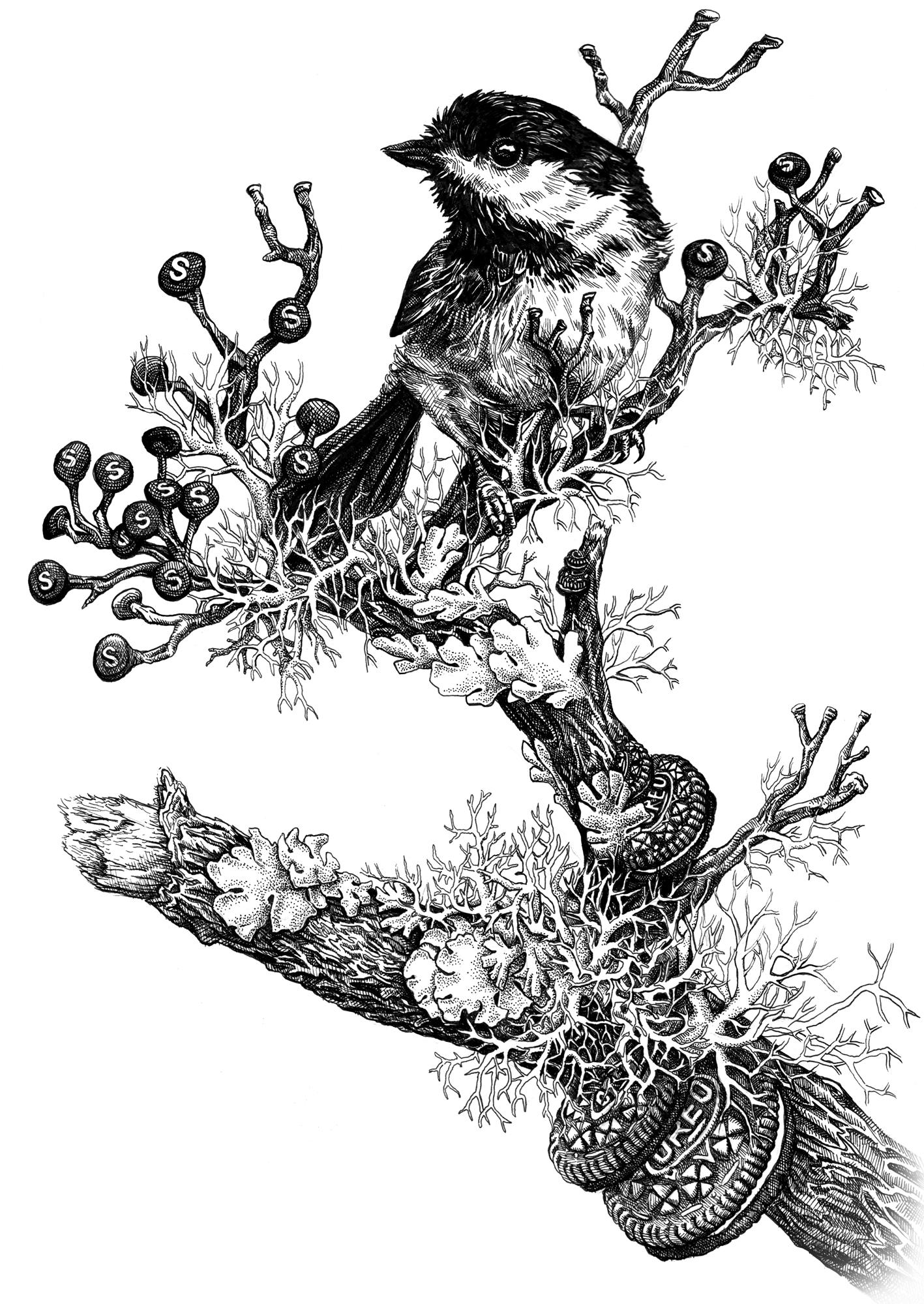 Oreo-Chickadee.jpg