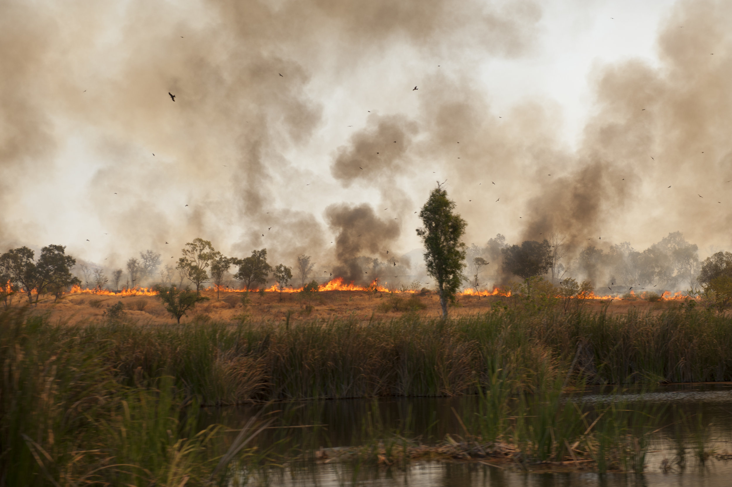 Ord River fire