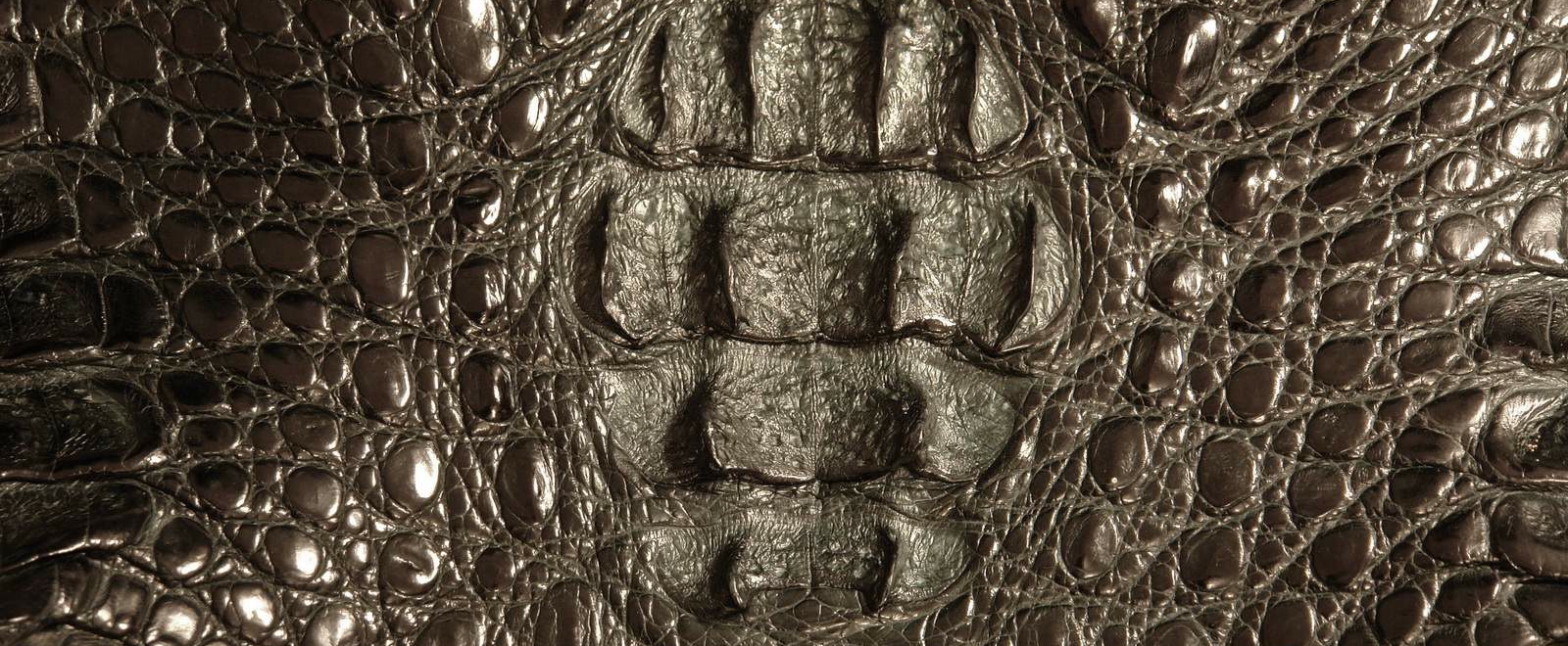 krokodil-kozha