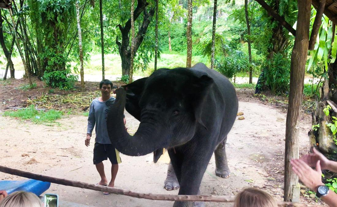 шоу слоненка