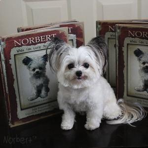 Team Norbert.jpg