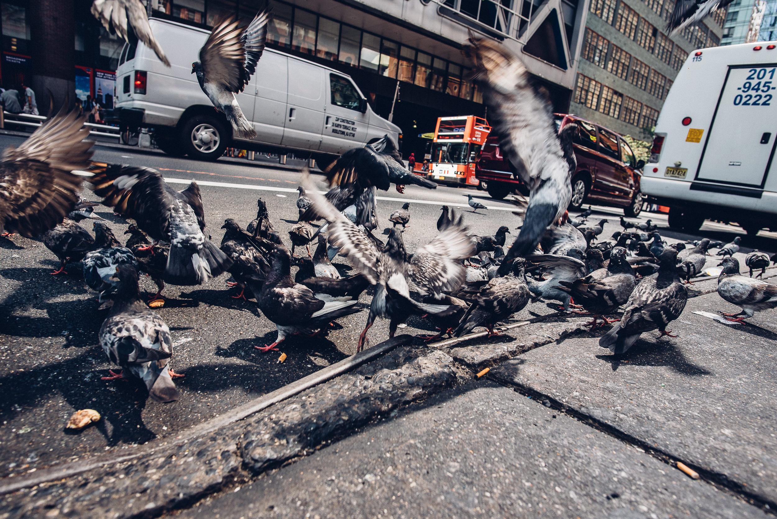 New-York-City-Travel-Photography-033.jpg