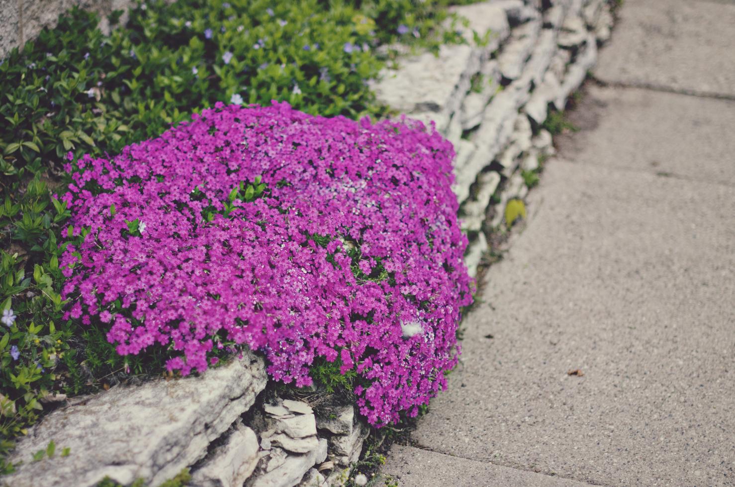 spring20120329_0036.jpg