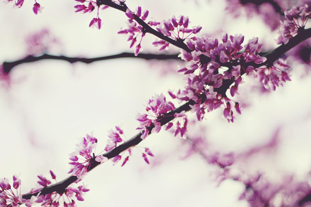 spring20120328_0023.jpg