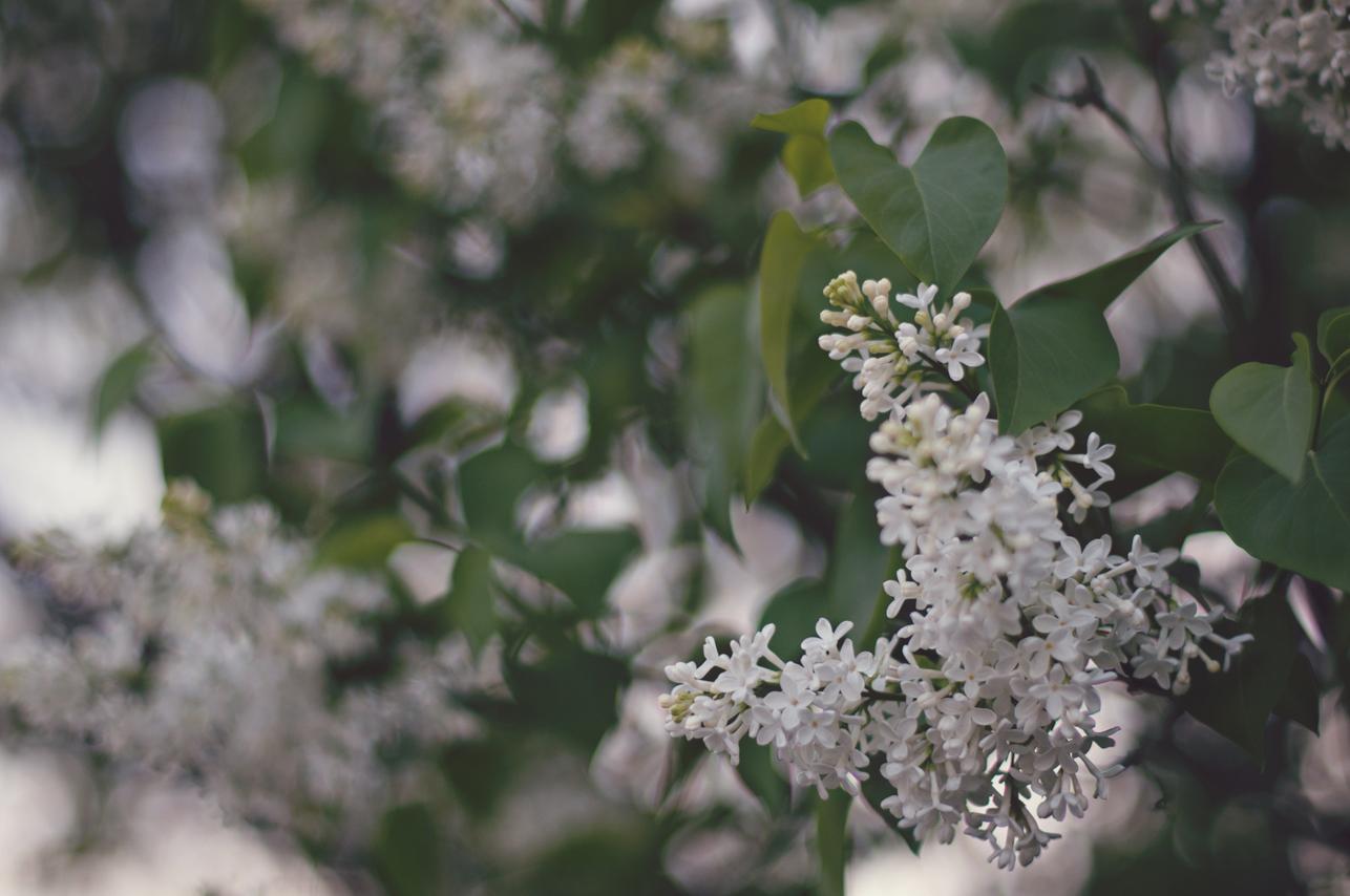 spring20120328_0021.jpg