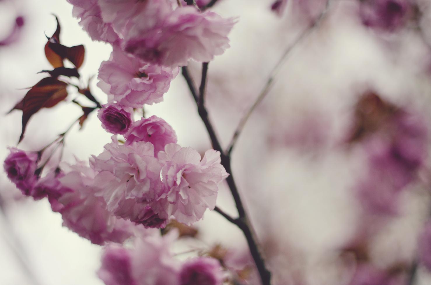 spring20120329_0042.jpg