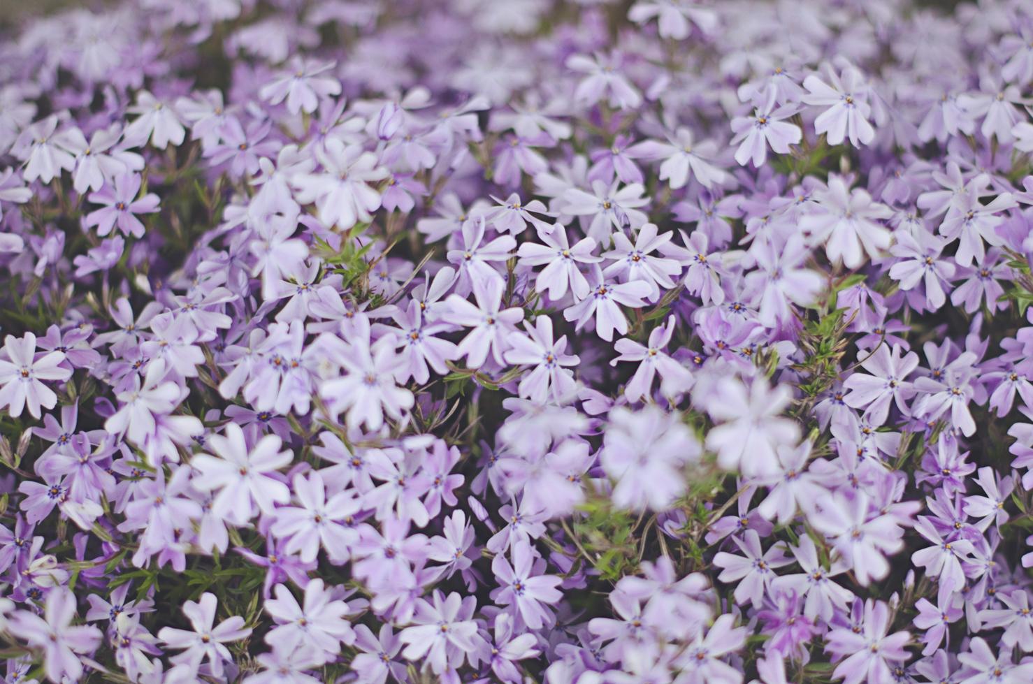 spring20120329_0034.jpg