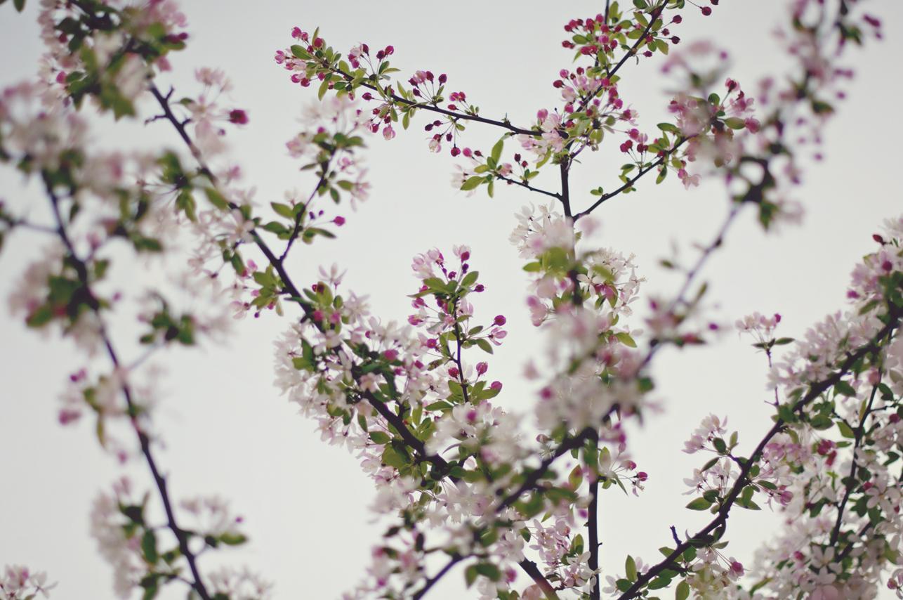 spring20120328_0014.jpg