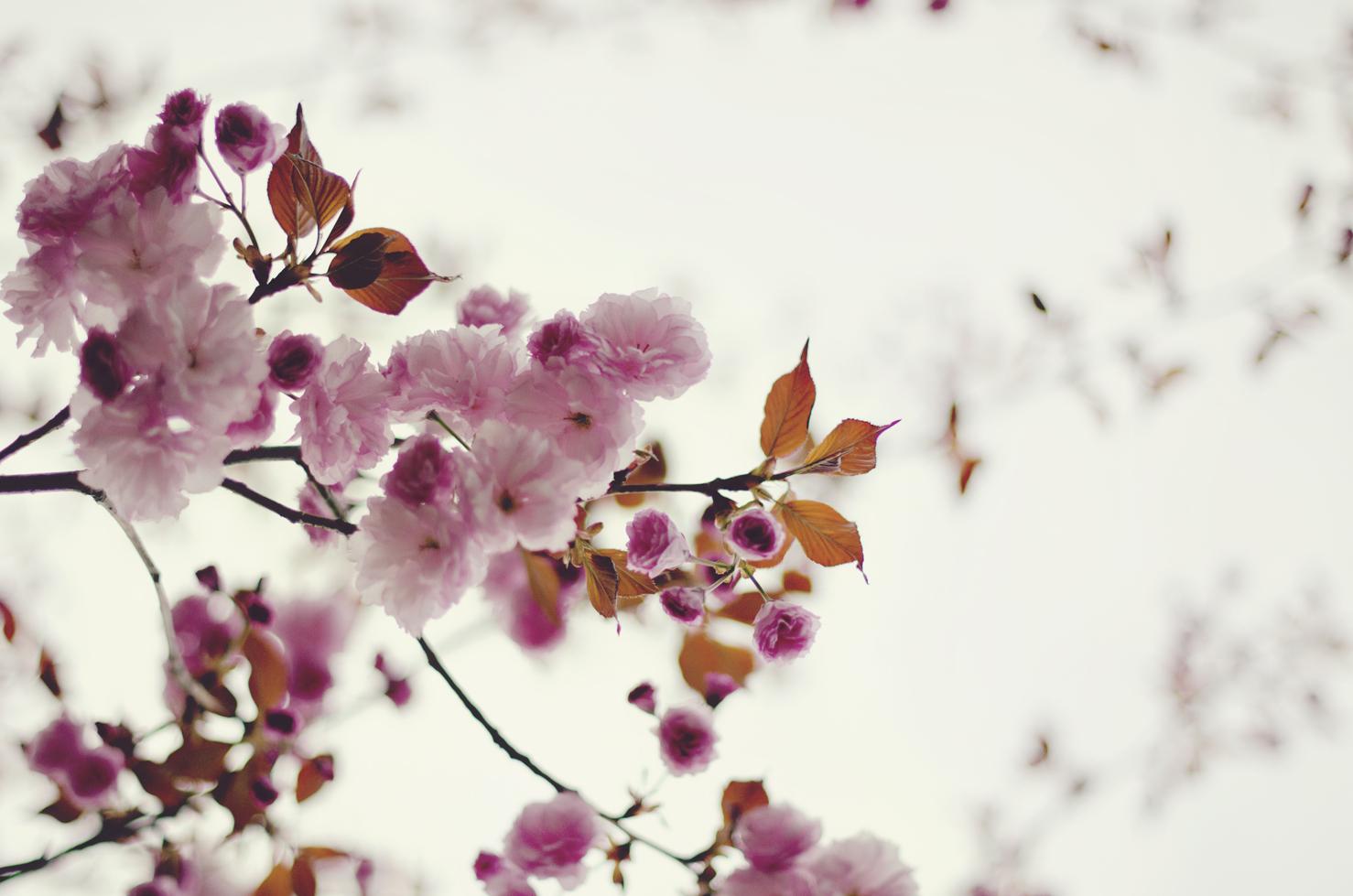 spring20120329_0043.jpg