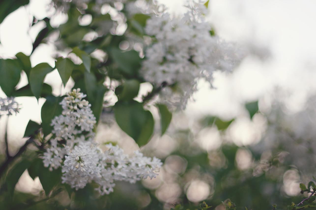 spring20120328_0020.jpg