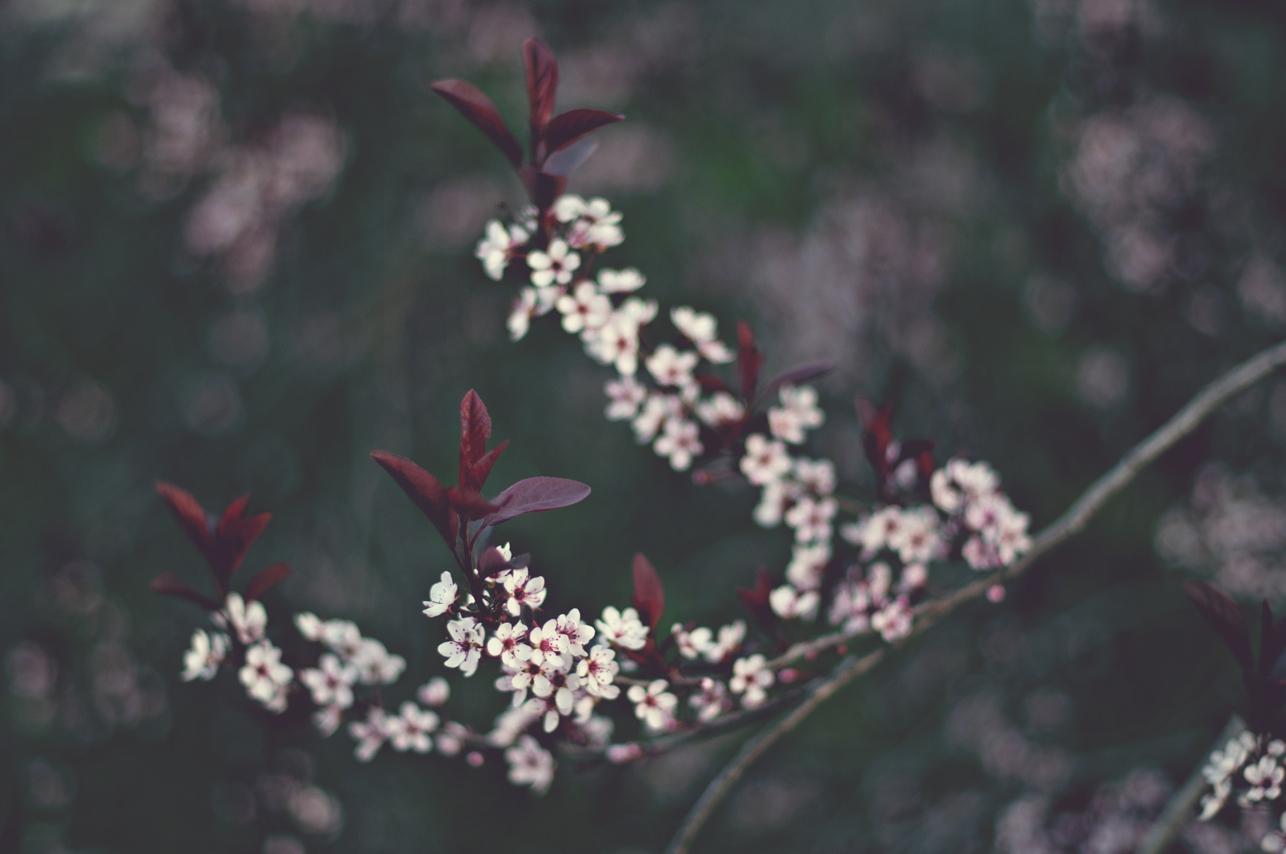 spring20120328_0028.jpg