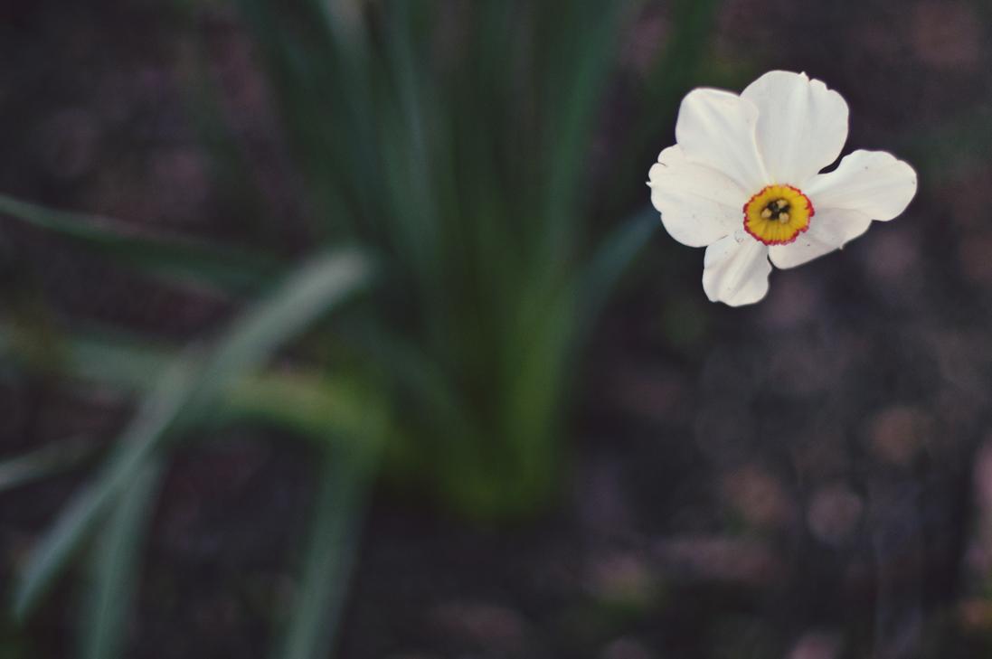 spring20120328_0030.jpg