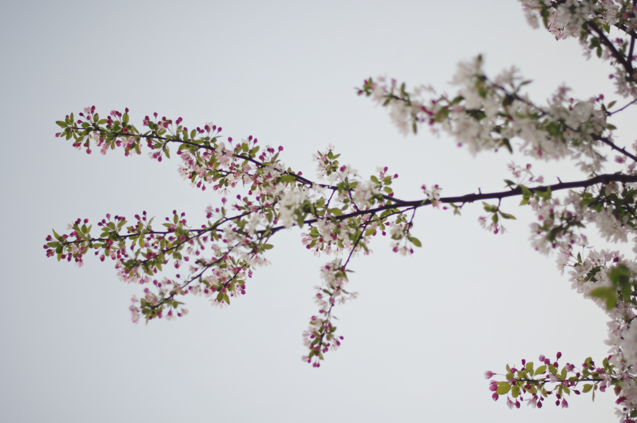 spring20120328_0018.jpg