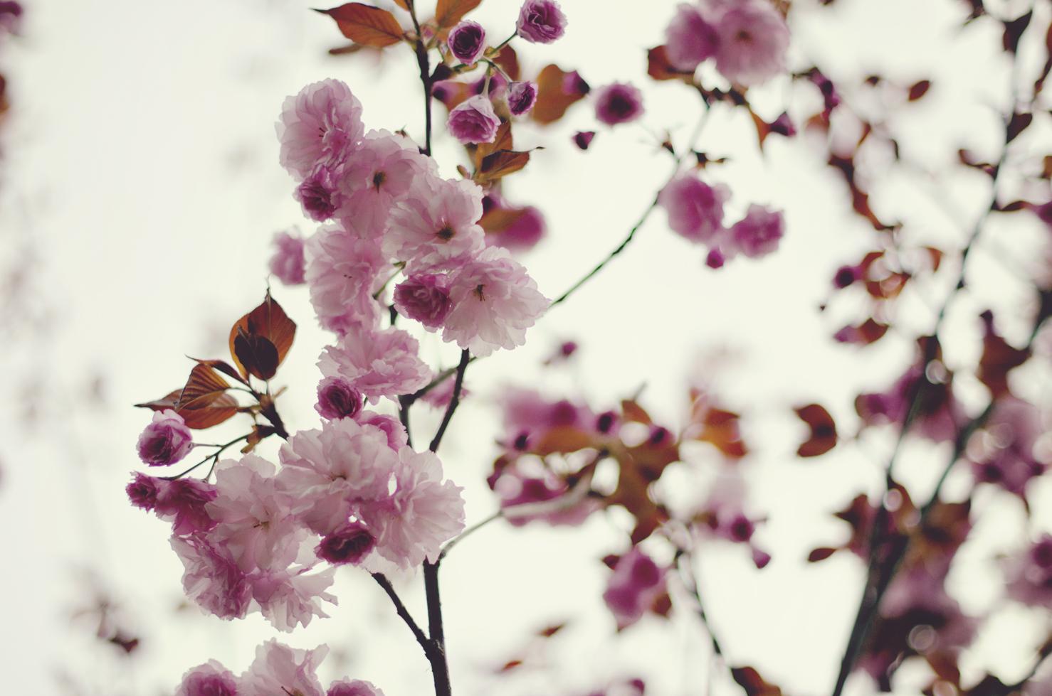 spring20120329_0044.jpg