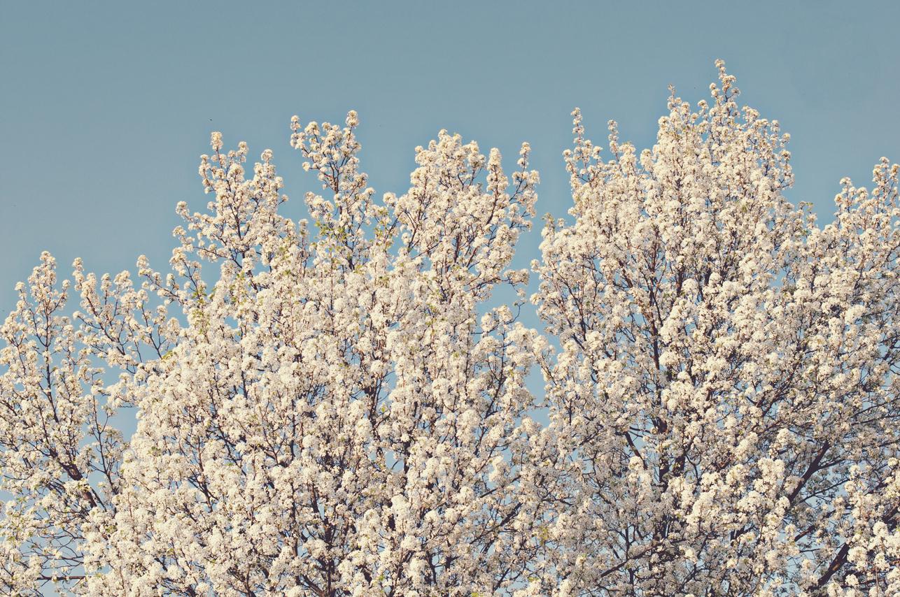 spring20120320_0005.jpg