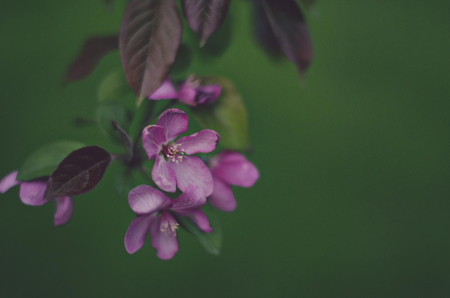 spring20120329_0046.jpg