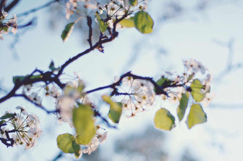 spring20120328_0010.jpg