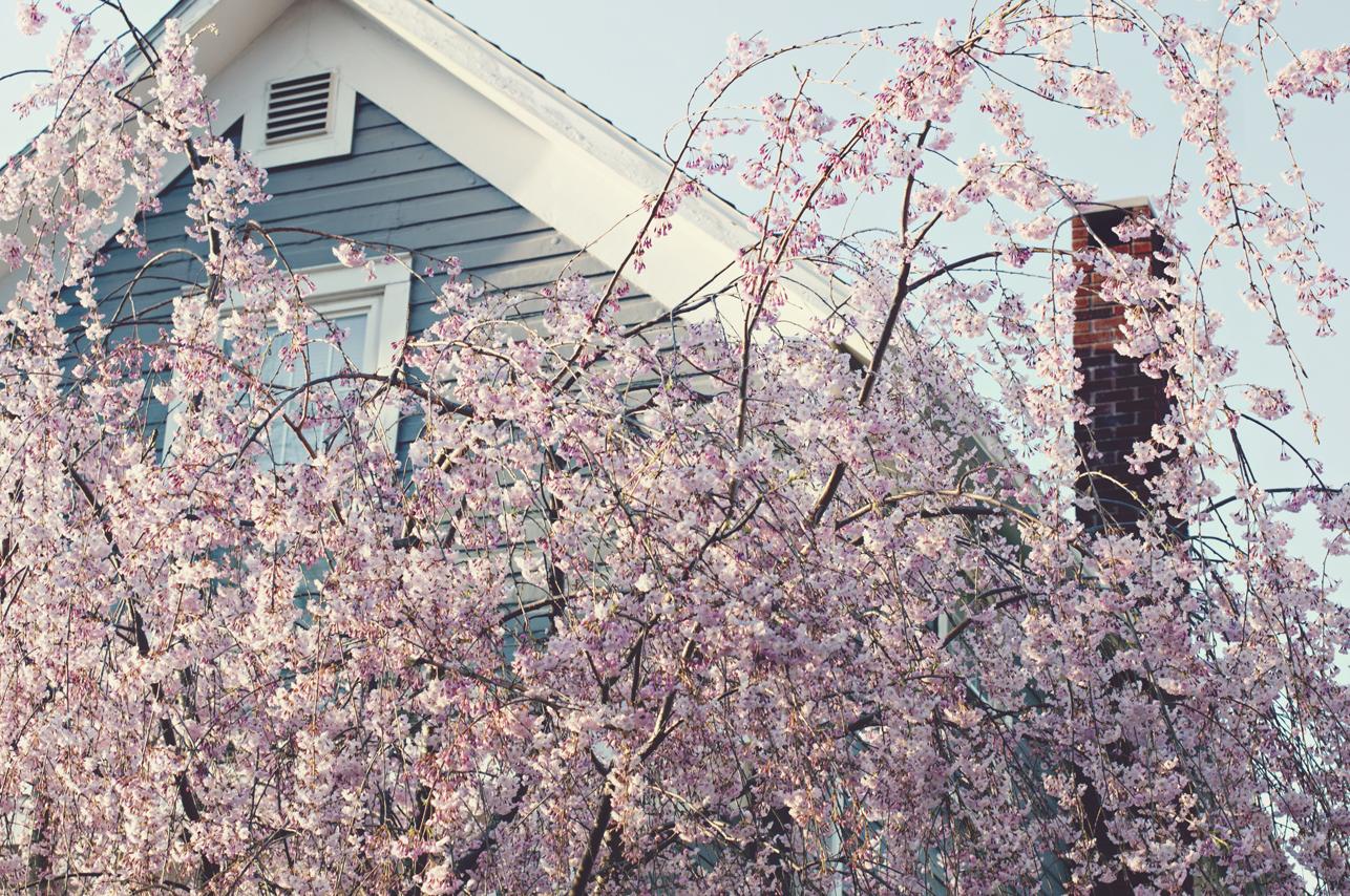 spring20120320_0008.jpg