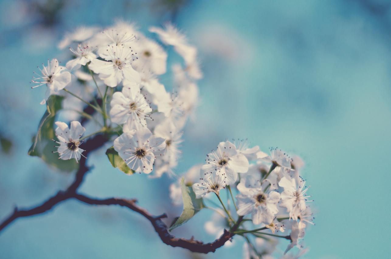 spring20120328_0011.jpg