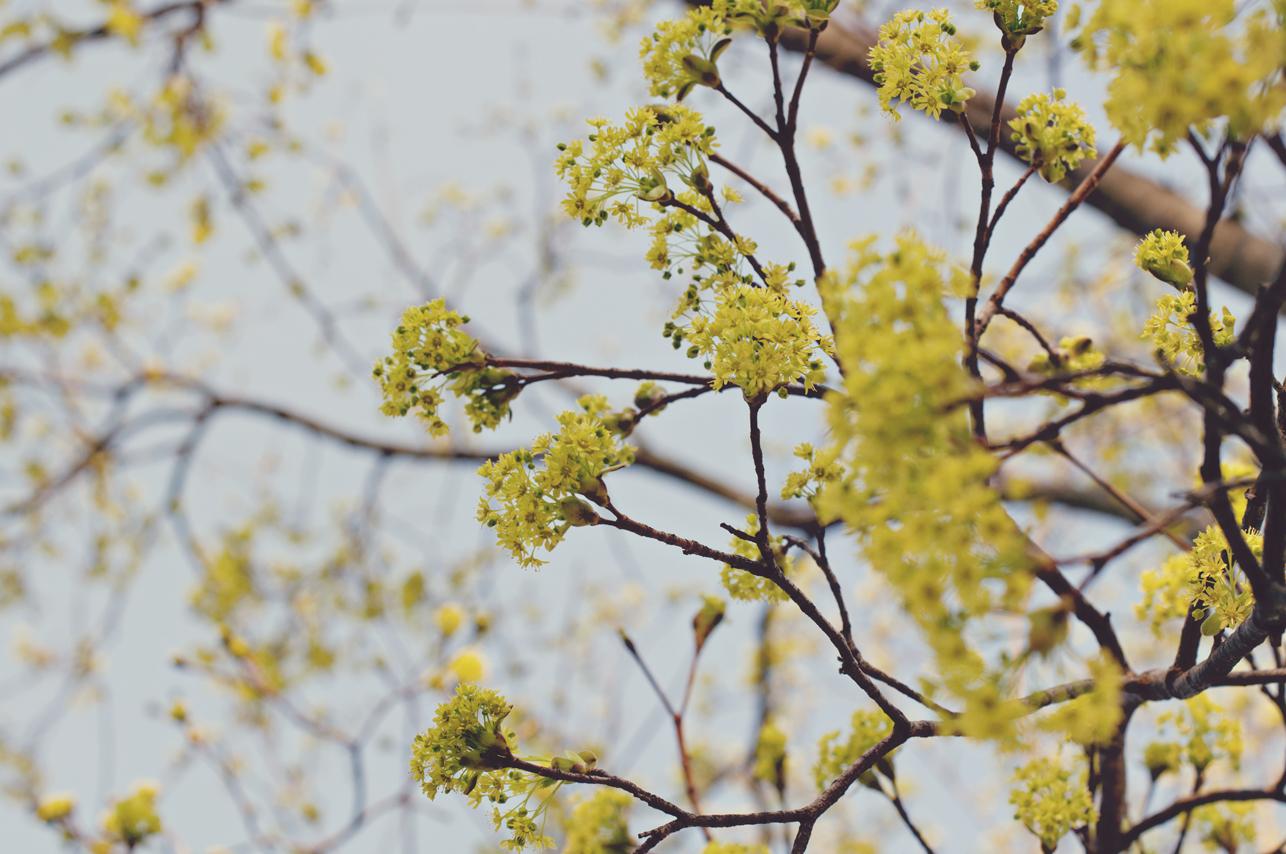 spring20120320_0001.jpg