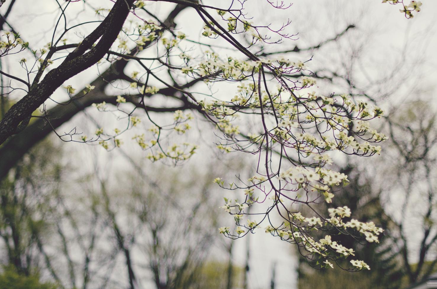 spring20120329_0048.jpg
