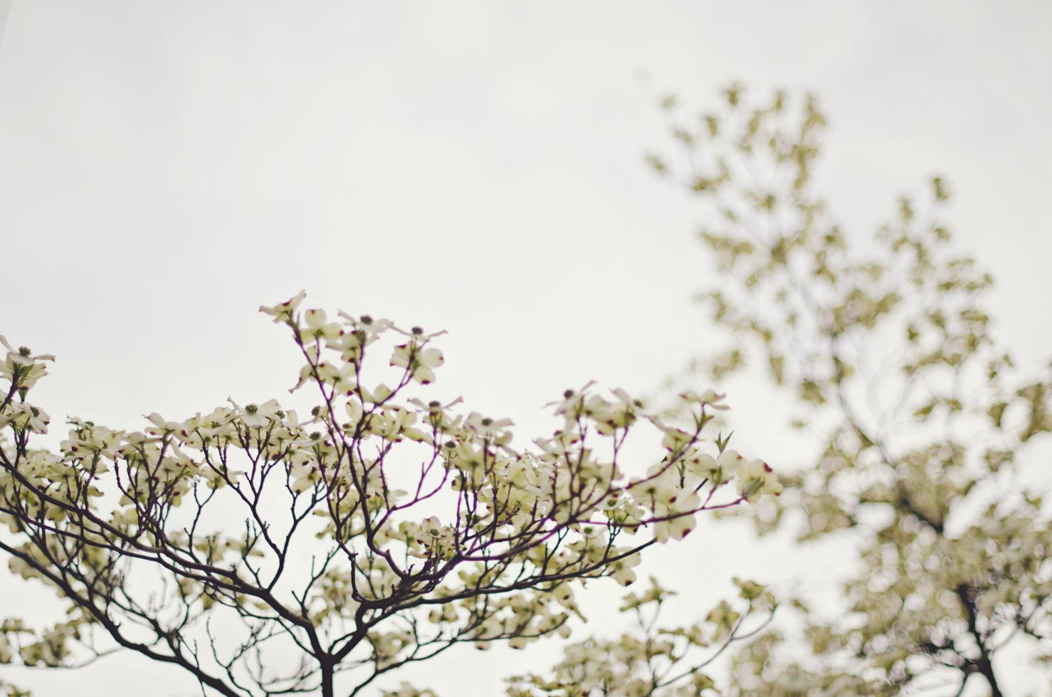 spring20120329_0050.jpg